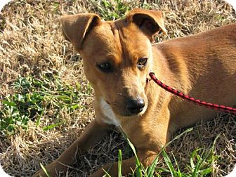 Terrier (Unknown Type, Medium) Mix Dog for adoption in Orland, California - Earl