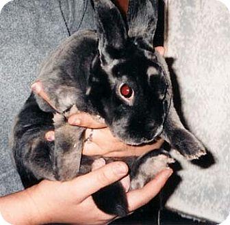 Rex for adoption in Wakefield, Massachusetts - Smokey