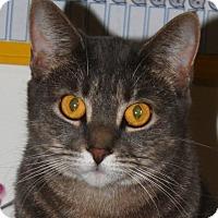 Adopt A Pet :: Sylvia - North Branford, CT