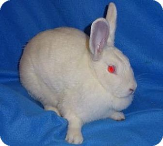 New Zealand Mix for adoption in Woburn, Massachusetts - Tulip