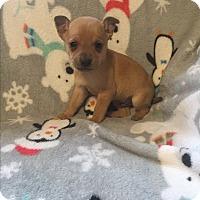 Adopt A Pet :: Mikey - Hazard, KY