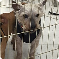 Adopt A Pet :: Beau - Beavercreek, OH