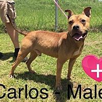 Adopt A Pet :: Carlos - Waycross, GA