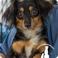 Adopt A Pet :: Meri - Baton Rouge, LA