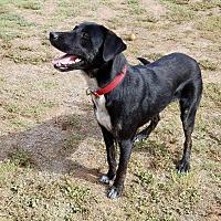 Adopt A Pet :: Nascar - Brattleboro, VT