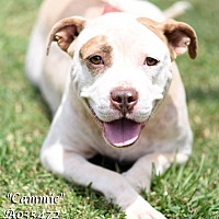 Adopt A Pet :: Cammy - Newnan City, GA