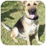 Photo 3 - German Shepherd Dog Dog for adoption in Pike Road, Alabama - Trooper