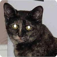 Adopt A Pet :: Speckles - Port Republic, MD
