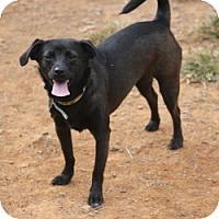 Adopt A Pet :: Clover - Charlotte, NC