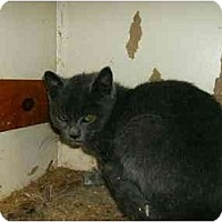 Adopt A Pet :: Asher - New Ringgold, PA