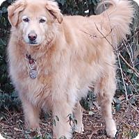 Adopt A Pet :: Buddie - St Louis, MO
