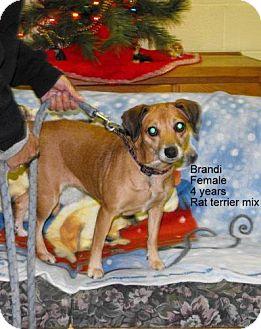 Terrier (Unknown Type, Medium) Mix Dog for adoption in Napoleon, Ohio - Brandi