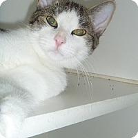 Adopt A Pet :: Marshall - Hamburg, NY