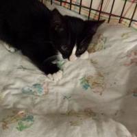 Adopt A Pet :: Mandoline - Winona, MN