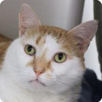 Adopt A Pet :: Frederick 22686-c - Ithaca, NY