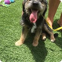 Adopt A Pet :: Lucky - El Segundo, CA