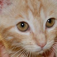 Adopt A Pet :: Teddy - Salem, WV
