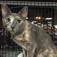 Adopt A Pet :: Cami - Horsham, PA