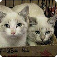 Adopt A Pet :: Dell - Jacksonville, FL