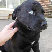 Adopt A Pet :: Ava - maryville, TN