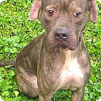 Adopt A Pet :: Jasmine - Chicago, IL