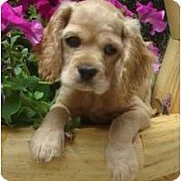 Adopt A Pet :: Megan - Sugarland, TX