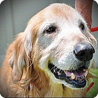 Adopt A Pet :: Sanders - New Canaan, CT