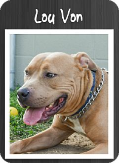 Pit Bull Terrier Mix Dog for adoption in Grand Rapids, Michigan - Lou Von