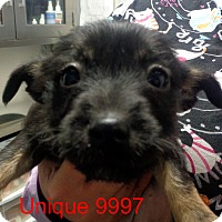 Adopt A Pet :: Unique - Greencastle, NC