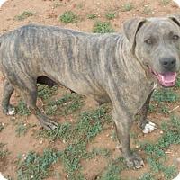 Adopt A Pet :: Lacy - Post, TX
