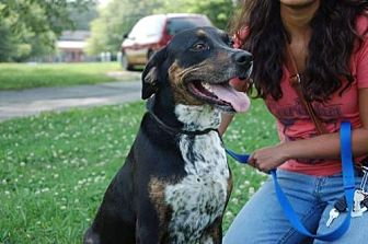 Bluetick Coonhound Mix Dog for adoption in Winder, Georgia - Chloe
