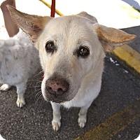 Adopt A Pet :: Callie - Marietta, GA