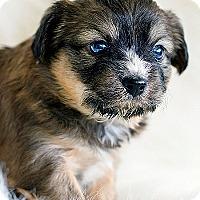 Adopt A Pet :: Gabi - La Costa, CA