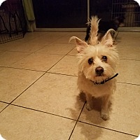 Adopt A Pet :: Sammy - San Dimas, CA