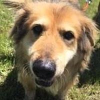 Adopt A Pet :: Fabio - Quinlan, TX