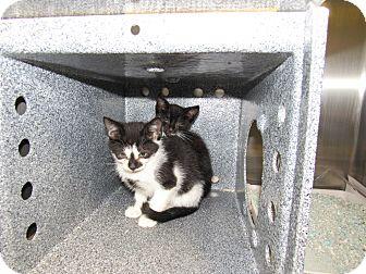 Adopt A Pet :: Bonnie & Clyde  - Henderson, NC