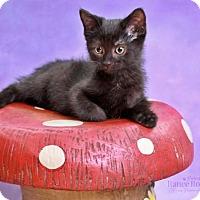 Adopt A Pet :: Diablo - Sterling Heights, MI