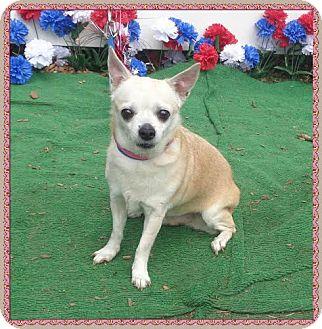 Chihuahua Mix Dog for adoption in Marietta, Georgia - ROSIE (R)