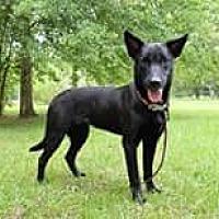 Adopt A Pet :: Isaac - DeRidder, LA