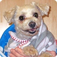 Adopt A Pet :: Snorkel - Wildomar, CA