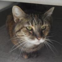 Adopt A Pet :: 653215 - Bakersfield, CA