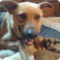 Adopt A Pet :: Aggie - Kansas City, MO