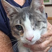 Adopt A Pet :: CLOVER - Glendale, AZ