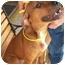 Photo 4 - Labrador Retriever Mix Dog for adoption in Slidell, Louisiana - Penny