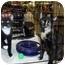 Photo 1 - Domestic Shorthair Cat for adoption in Overland Park, Kansas - Ella & Elsie