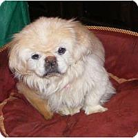 Adopt A Pet :: Miss Suzy - Warren, NJ