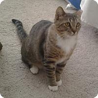 Adopt A Pet :: Mai - Chicago, IL