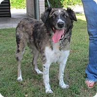 Adopt A Pet :: Lucy - Kingwood, TX