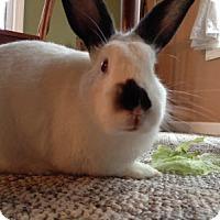 Adopt A Pet :: Bromley - Portland, ME