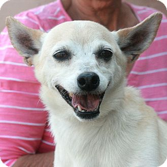 Terrier (Unknown Type, Small) Mix Dog for adoption in Canoga Park, California - Blaze